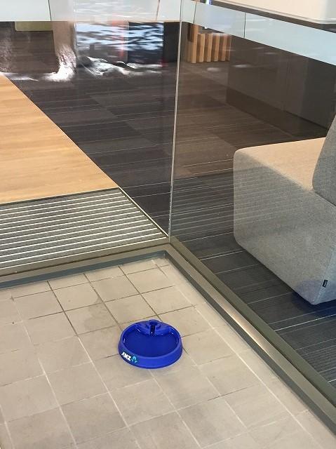 ANZ銀行 犬の為の水 オーストラリア