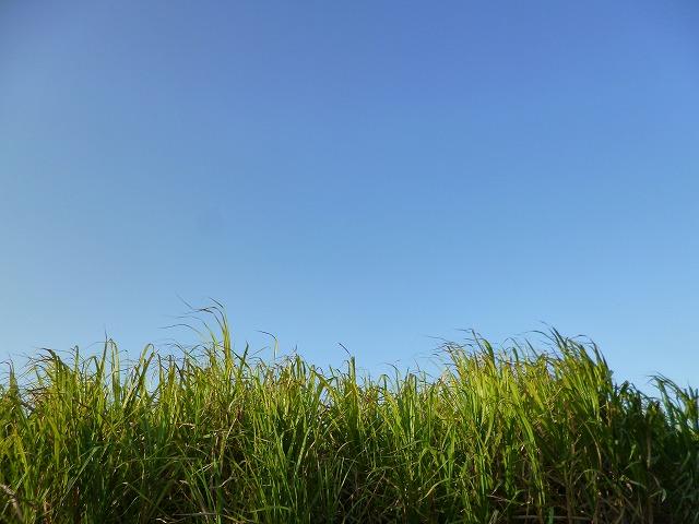 バンダバーグ オーストラリア サトウキビ畑